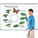 Жизненный цикл бабочки (магнитный)                                                                           новинка!!!